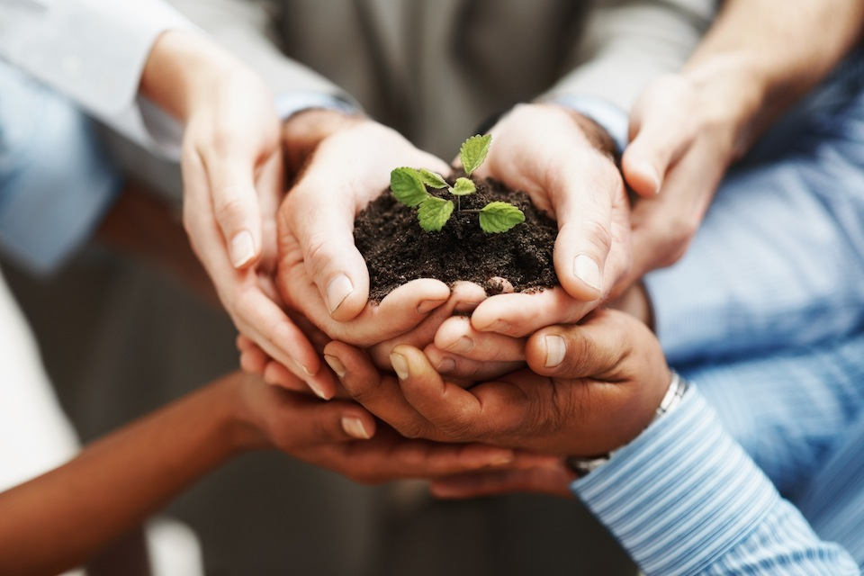 photodune-202925-business-development-hands-holding-seedling-in-a-group-m6